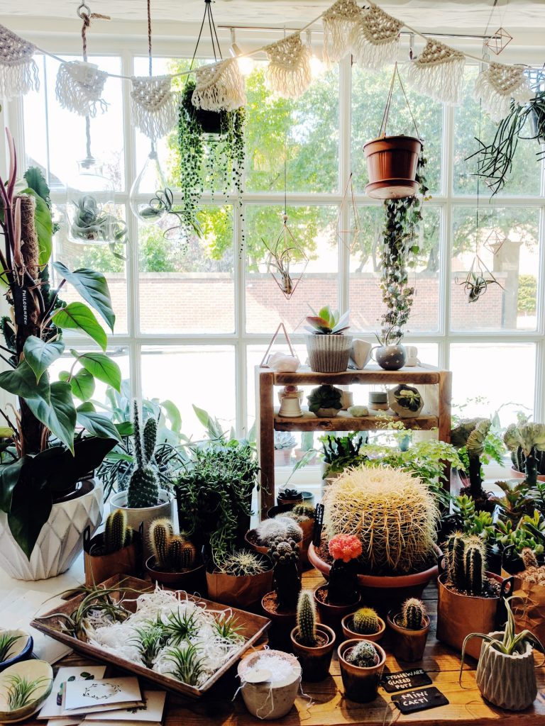 Succulents and Air Plants Boho interior